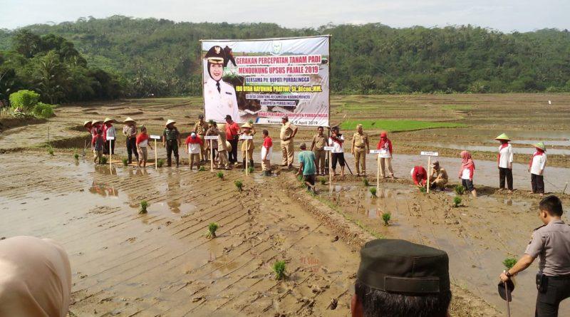 Plt.Bupati Purbalingga Hadiri gerakan Percepatan Tanam Padi guna mendukung UPSUS PAJALE 2019 di Desa Grantung.